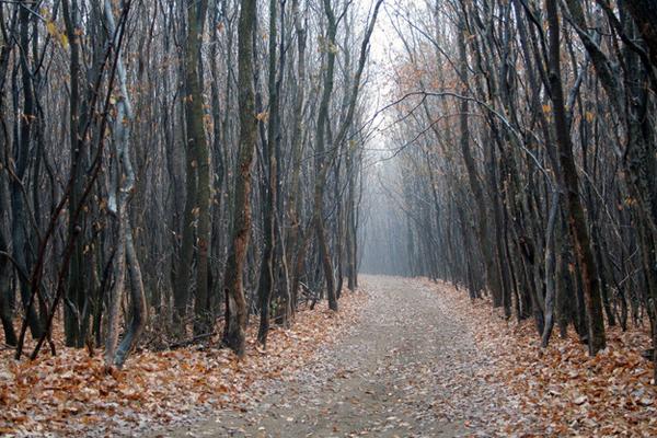 01-Hoia-Baciu-Forest-Romania