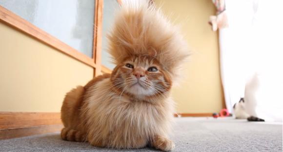 cool-mohawk-cat-2