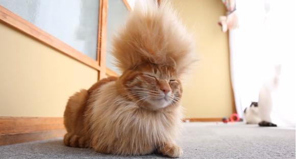 cool-mohawk-cat-3