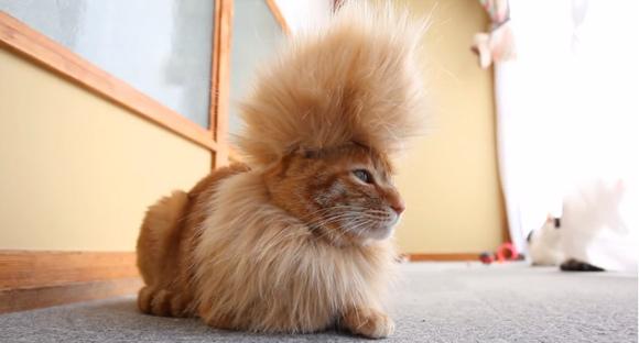 cool-mohawk-cat