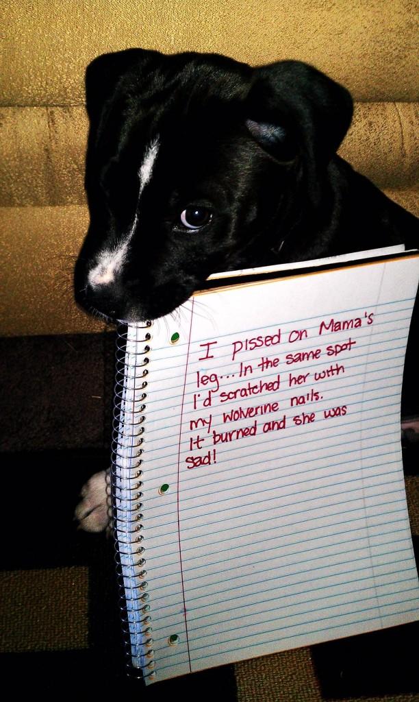 naughtiest-dogs-1