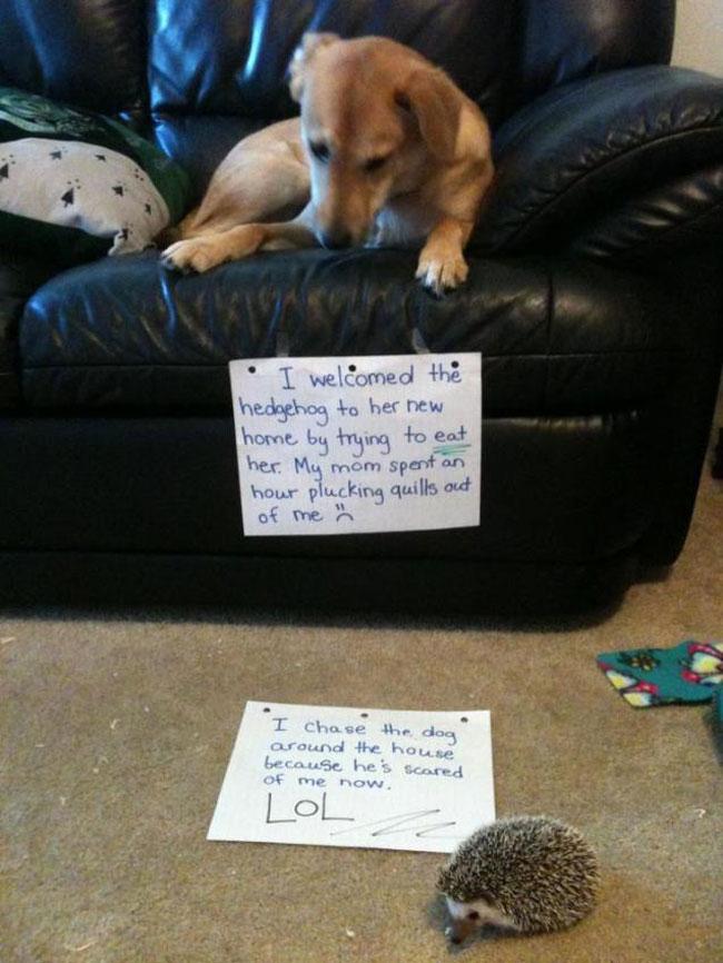 naughtiest-dogs-10