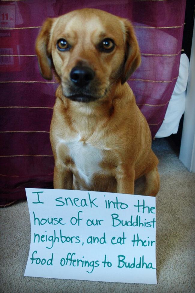 naughtiest-dogs-13