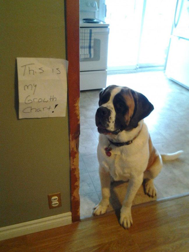 naughtiest-dogs-16