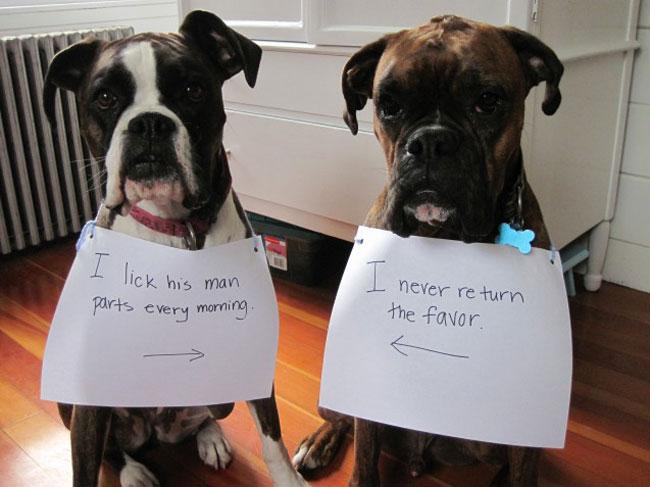 naughtiest-dogs-24