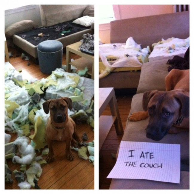 naughtiest-dogs-26