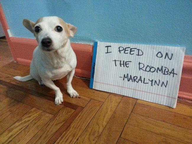 naughtiest-dogs-5