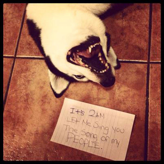 naughtiest-dogs-6