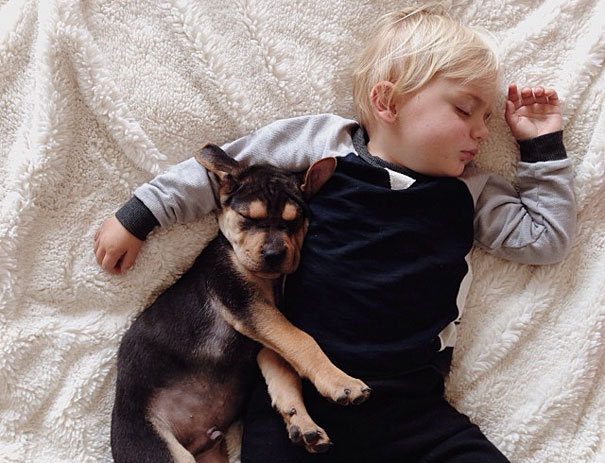 toddler-naps-with-puppy-theo-and-beau-15