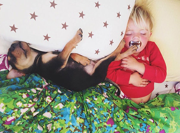 toddler-naps-with-puppy-theo-and-beau-2