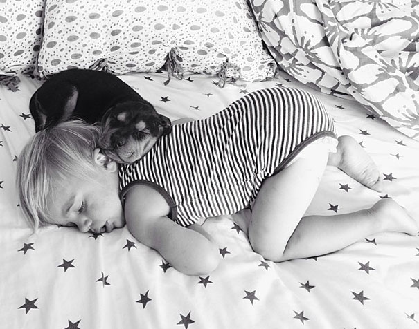 toddler-naps-with-puppy-theo-and-beau-5