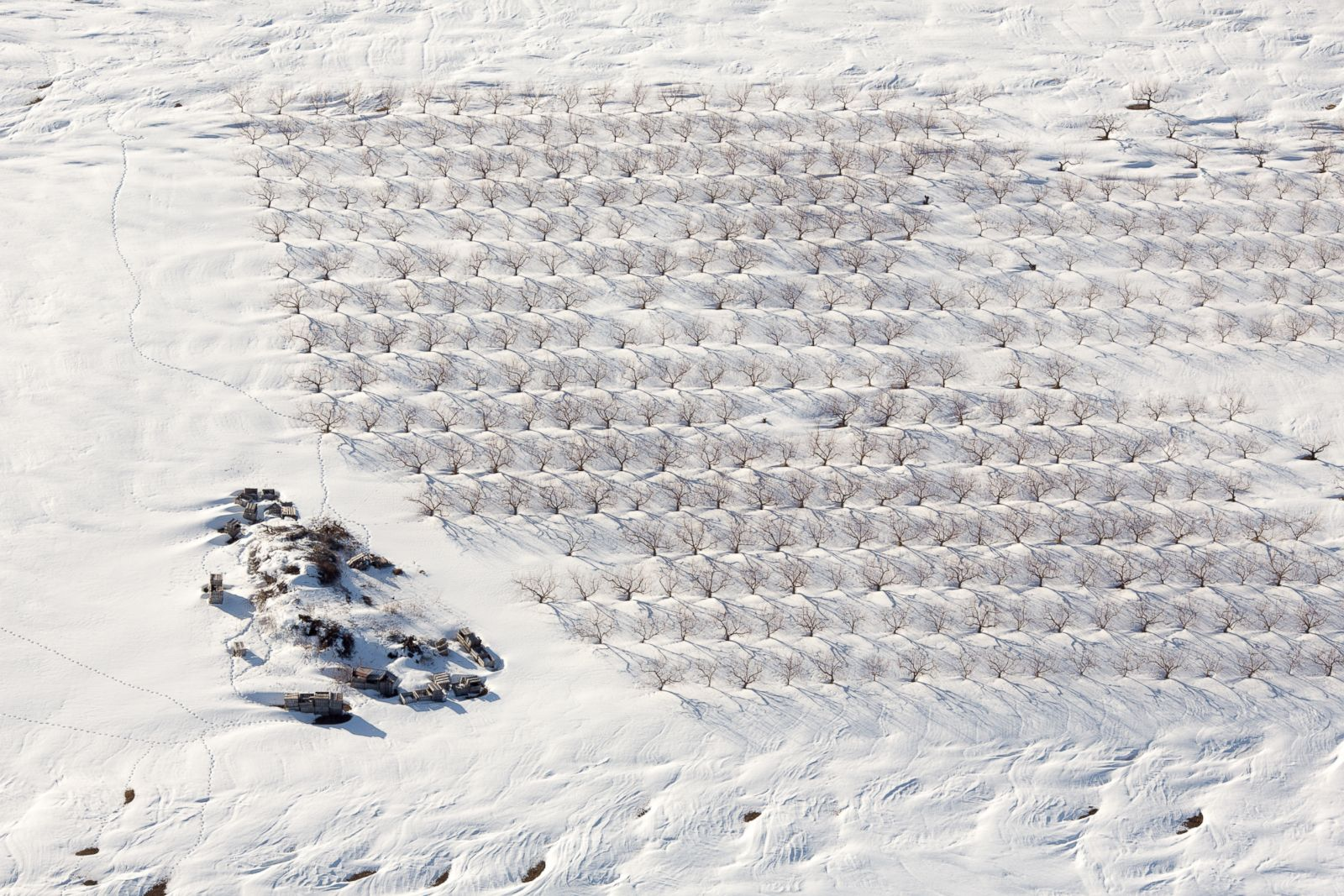 An orchard covered in snow in Bolton, Massachussetts