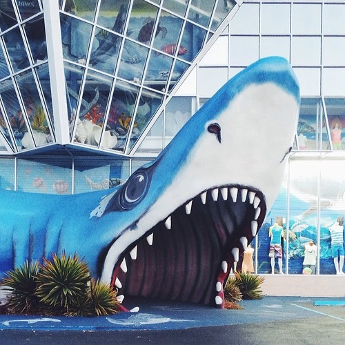 Find Momo at a shark.