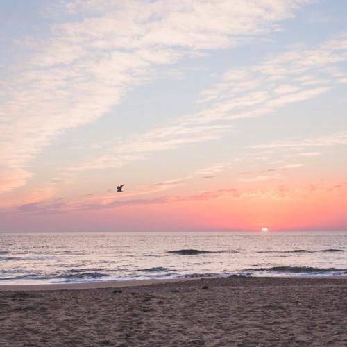 Find Momo in the sunrise. (at Atlantic Ocean)