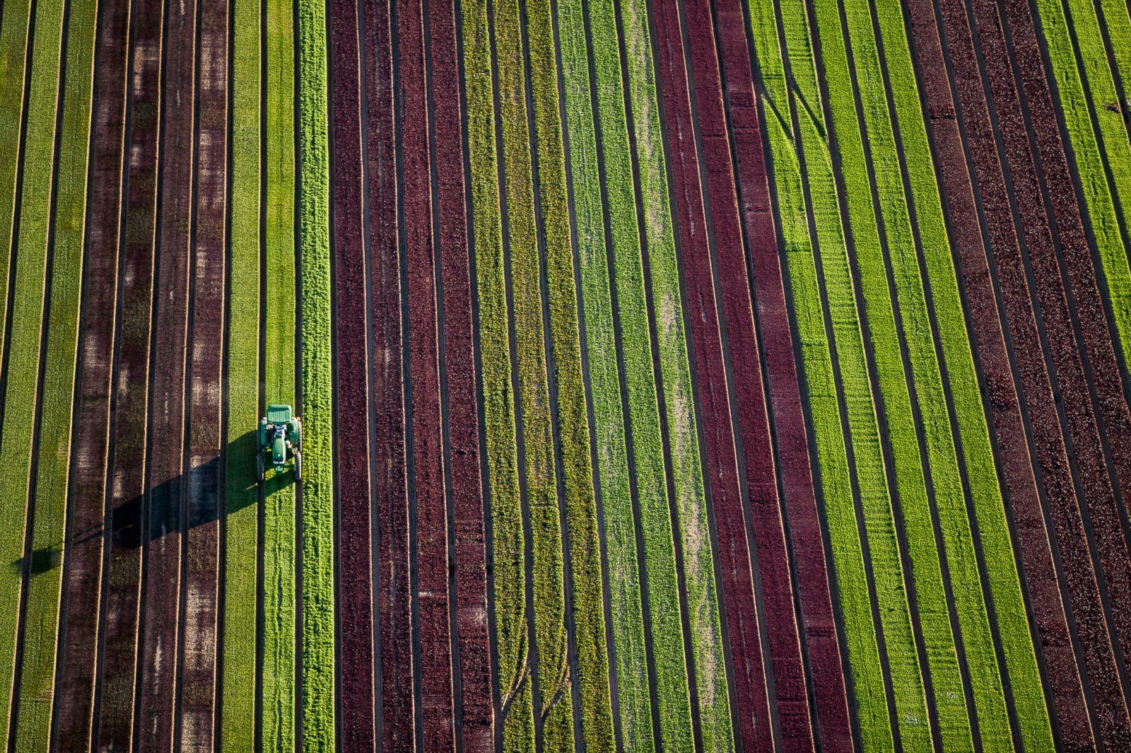 Strips in fields in Goodyear, Arizona