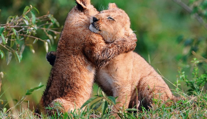 animals-hugging-11