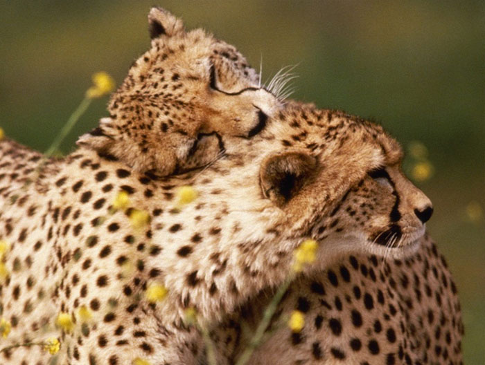 animals-hugging-13