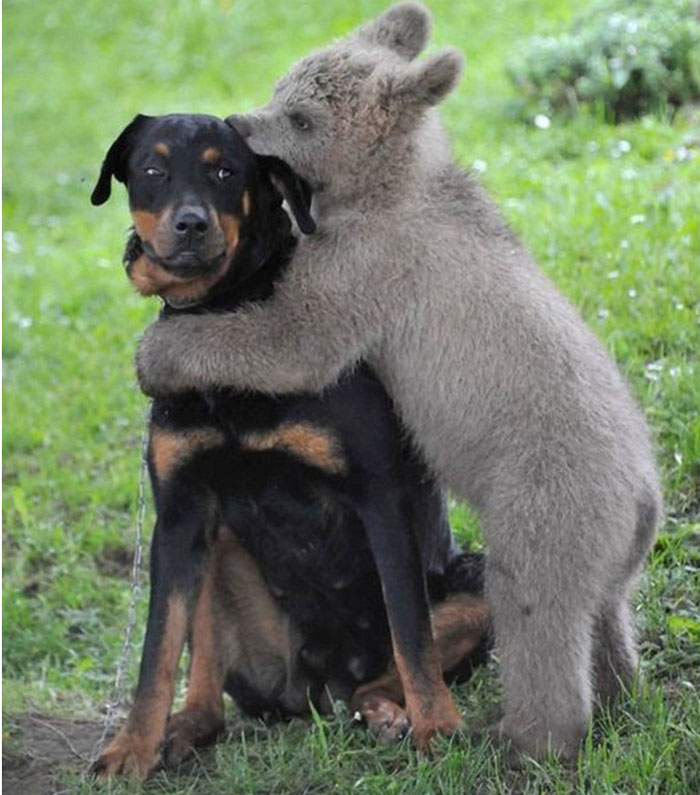 animals-hugging-2