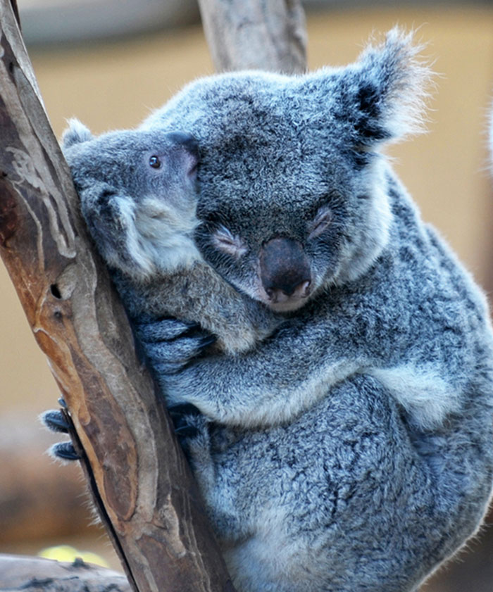 animals-hugging-3