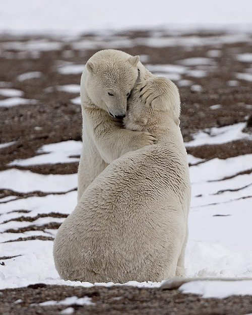 animals-hugging-31
