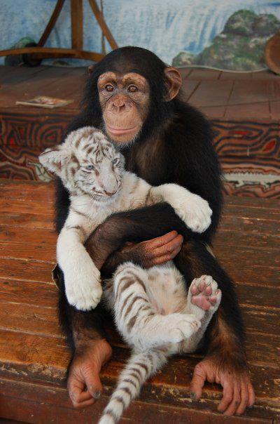 animals-hugging-36