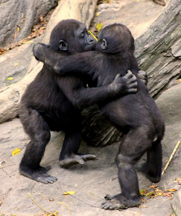 animals-hugging-4