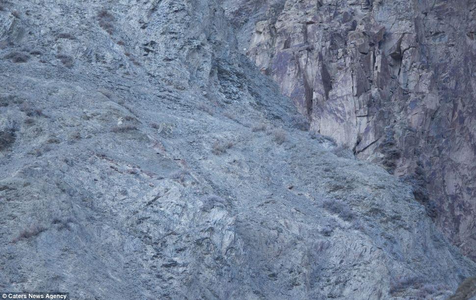 snow-leopard-1a