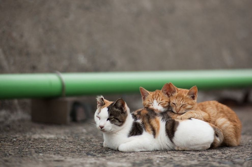 Cat Island Fukuoka, Japan (10)