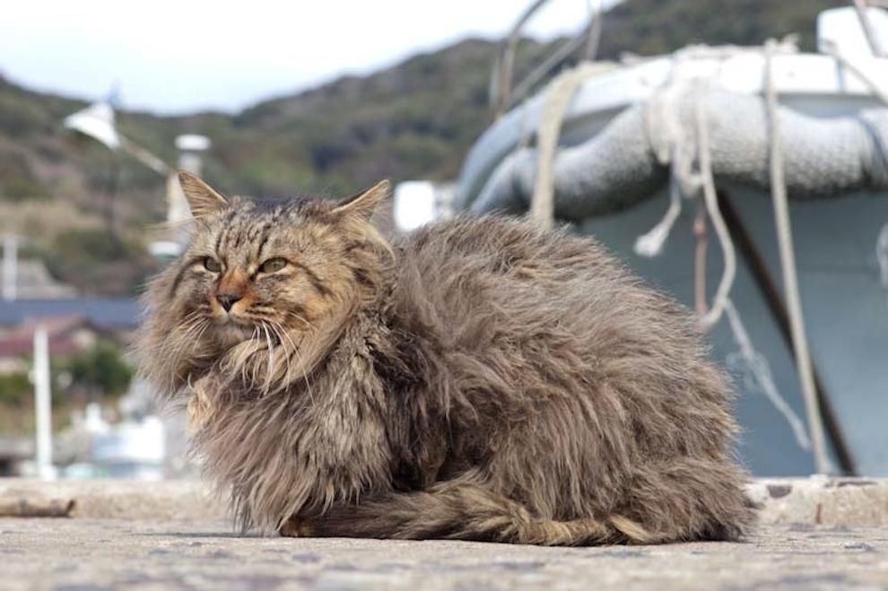 Cat Island Fukuoka, Japan (12)