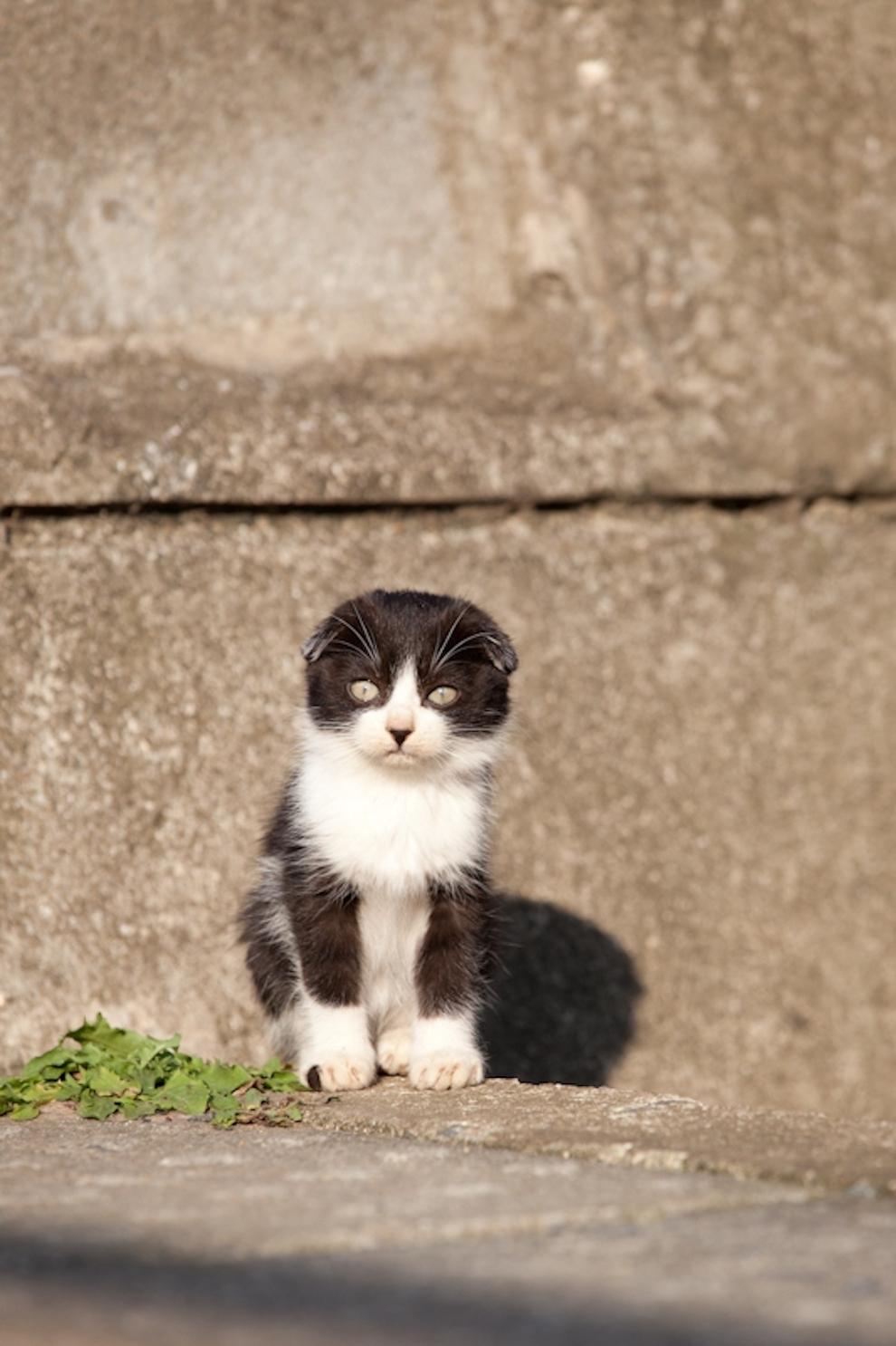 Cat Island Fukuoka, Japan (18)