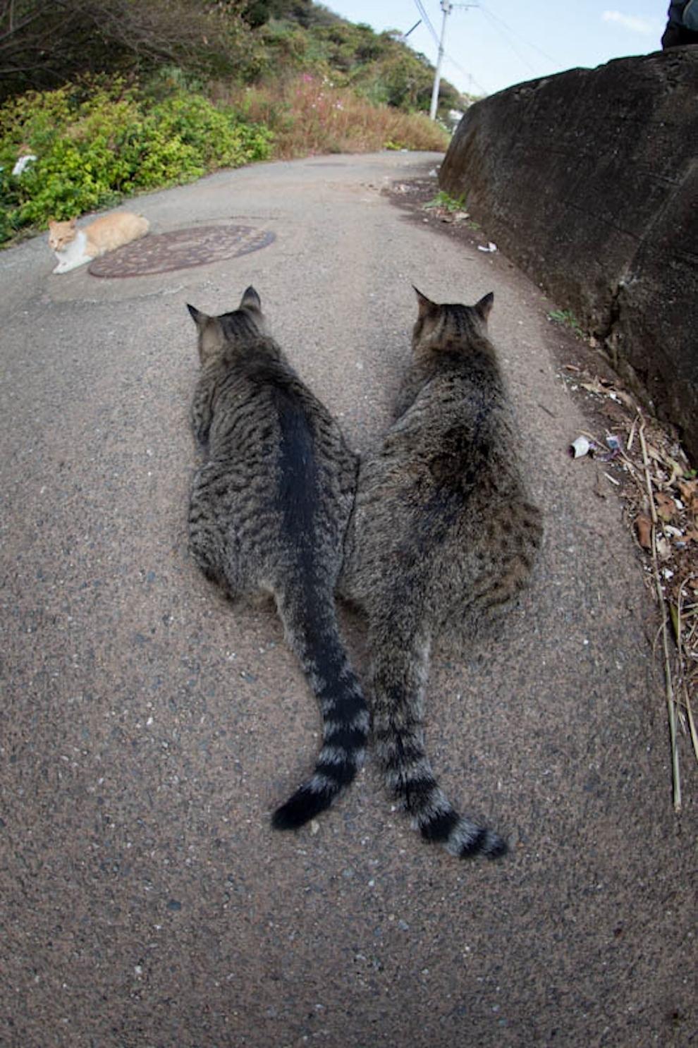 Cat Island Fukuoka, Japan (2)