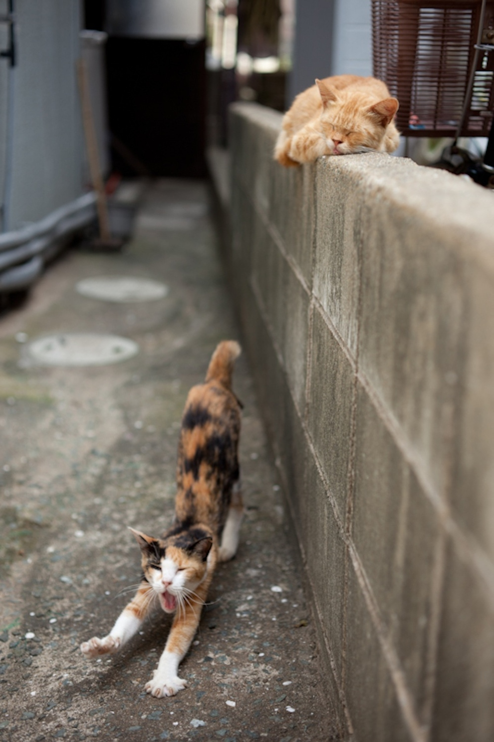 Cat Island Fukuoka, Japan (20)
