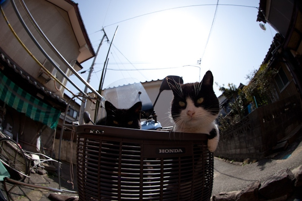 Cat Island Fukuoka, Japan (27)