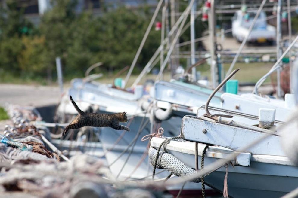 Cat Island Fukuoka, Japan (30)