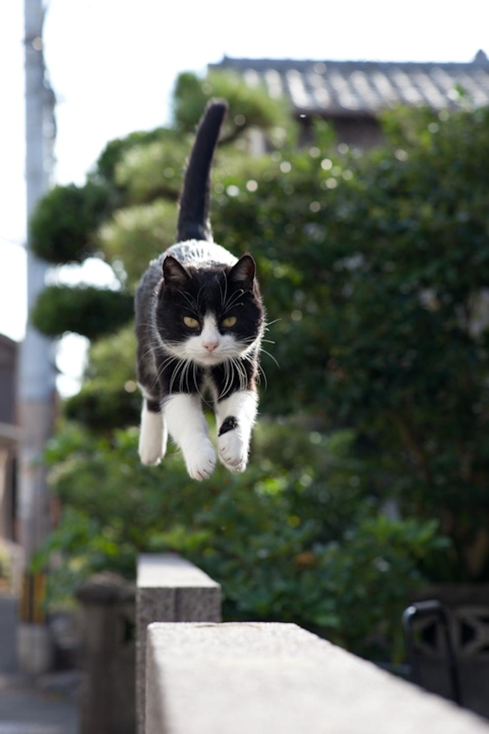 Cat Island Fukuoka, Japan (36)