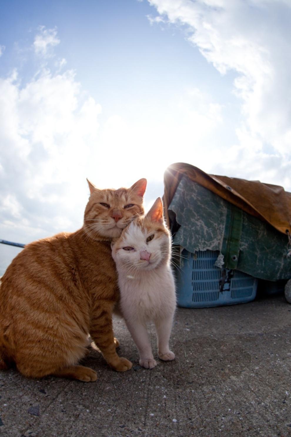 Cat Island Fukuoka, Japan (42)