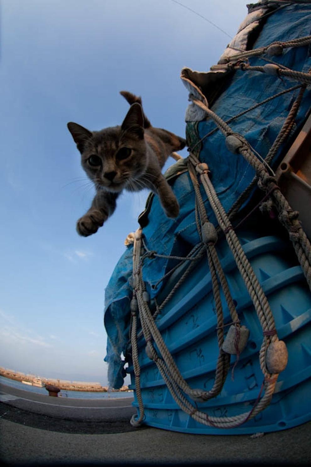 Cat Island Fukuoka, Japan (43)