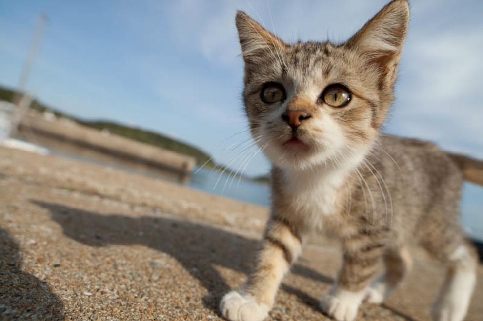 Cat Island Fukuoka, Japan (47)