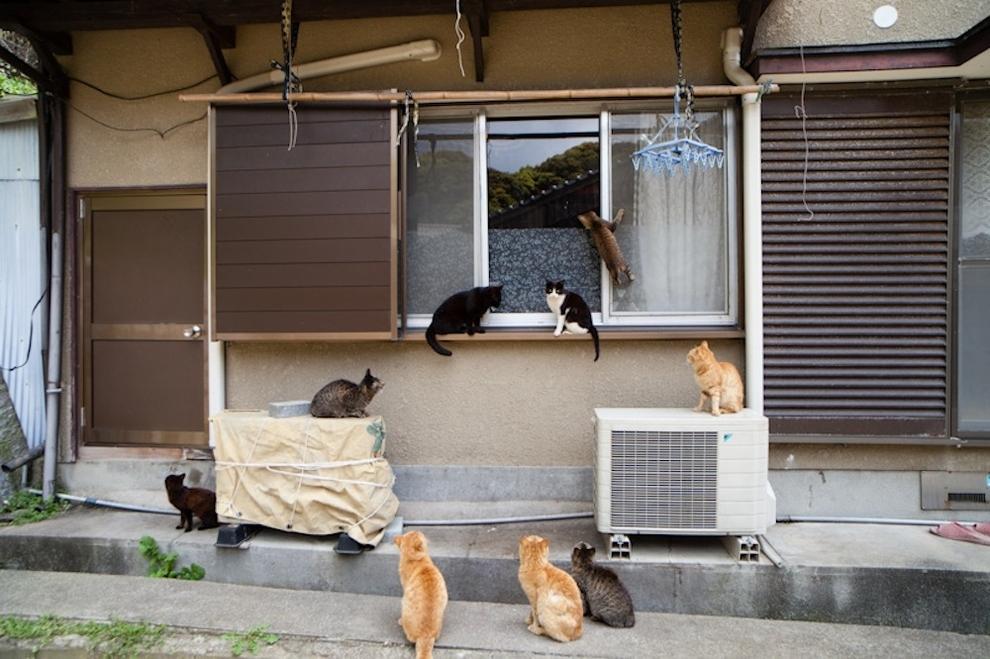 Cat Island Fukuoka, Japan (48)