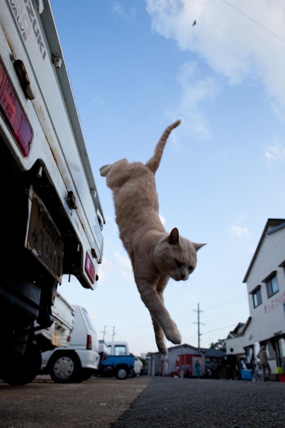 Cat Island Fukuoka, Japan (49)