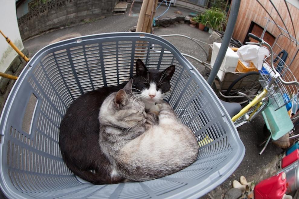 Cat Island Fukuoka, Japan (5)