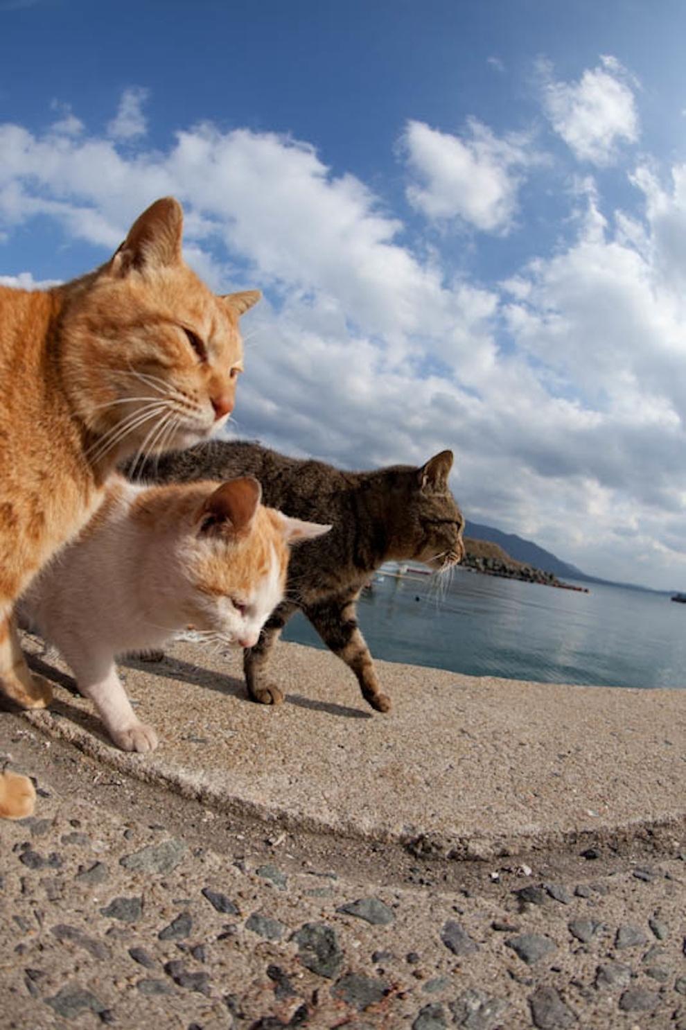 Cat Island Fukuoka, Japan (50)