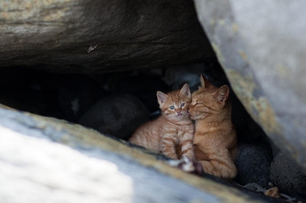 Cat Island Fukuoka, Japan (6)