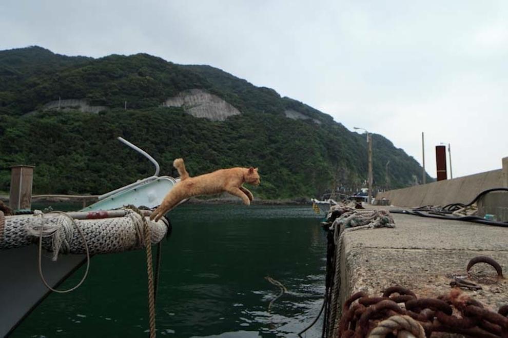 Cat Island Fukuoka, Japan (9)