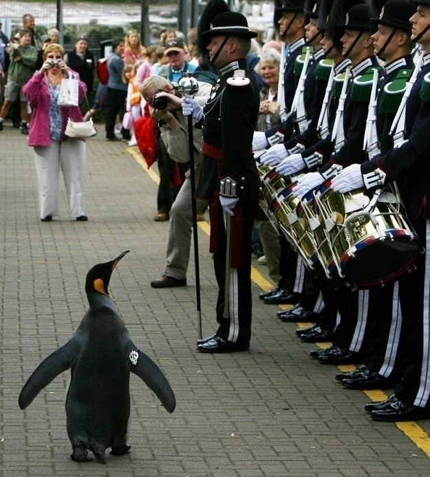 Colonel-in-Chief Sir Nils Olav