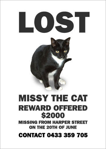 Lost Cat Poster (4)