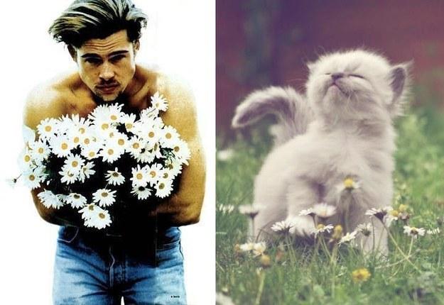 Male Celebrity vs. Cat (26)