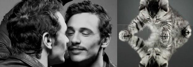 Male Celebrity vs. Cat (27)