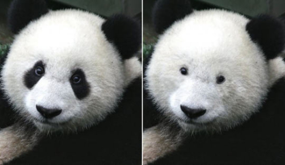 Panda Eyes Without Dark Rings