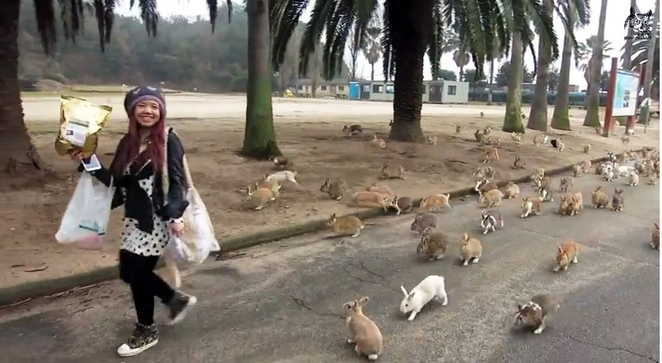 Rabbit Island, Okunoshima, Japan (2)